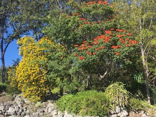 Guatemala fall colors